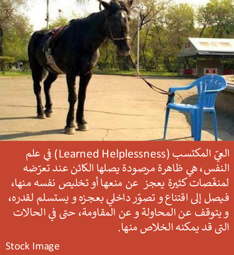 Article Images 07 - Learned Helplessness
